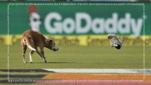 India v England: Dog stops play on first day in Visakhapatnam