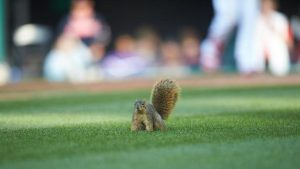 LOOK: Squirrel brings Twins-Indians game to a screeching halt for nearly five minutes