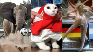 Animal predictions at the World Cup … how good?